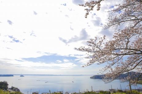 桜をバックに撮る前撮りが素敵!